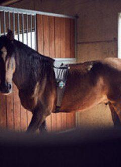 PIAVITA: Digital Innovation Meets Equine Veterinary Care