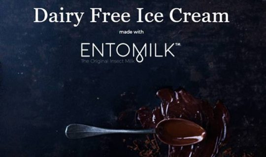This Startup Makes Ice Cream From Insect Larvae